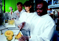 USDA-ARS researchers work on methods to improve microbiological quality of fresh-cut cantaloupe.