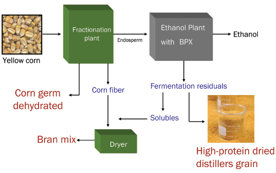 Broin fractionation process (BFRAC™) separates corn into fiber, germ, and endosperm, then ferments the endosperm by the company's BPX™ raw starch hydrolysis process to create ethanol. The remaining fractions are converted into other products marketed for use as livestock feed under the Dakota Gold brand name.
