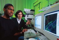 Microbiologists observe the display of a confocal microscope being used to examine an alfalfa sprout root that has been experimentally contaminated with Salmonella. The microbes are identified by green or blue dots on the computer screen.