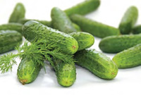 Cucumbers typically are acidified or fermented in bulk to create cured whole pickles that then may be further processed.