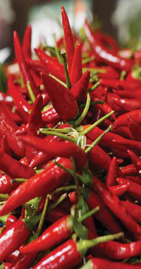 Capsaicinoid, the active component of Capsicum extract from hot red peppers, is linked to increased energy expenditure and enhanced carbohydrate and fat burning.