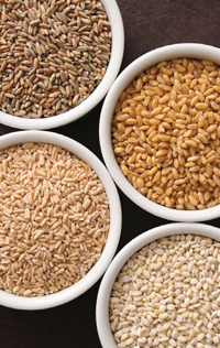 Various whole grains may contribute to helping people maintain a healthy weight by increasing the feeling of fullness after consumption.