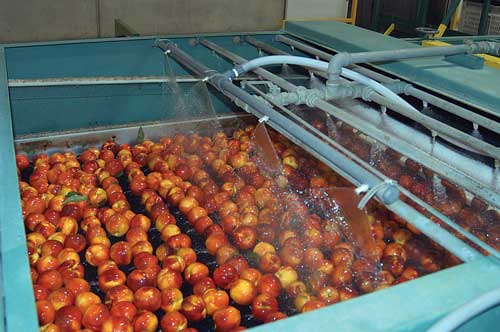 Ozone Processing of Foods and Beverages - IFT.org