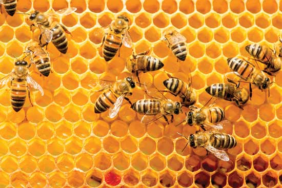 How Honey Is Processed - IFT.org