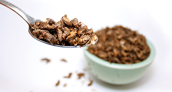 IFTNEXT Dissecting the Health Benefits of Edible Insects