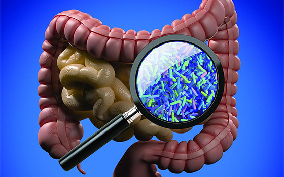 Unlocking the Secrets of the Gut Microbiome