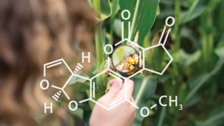 Maize chemical bonds