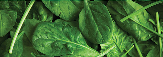 Local and Commercial Spinach