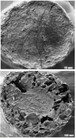 Fig. 3—Scanning electron micrographs of a cylindrical cross-section of a 1-cm diameter potato strip fried for 10 and 150 sec