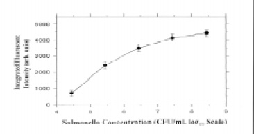 Fig. 3—Salmonella detection with fiber-optic tips. From Zhou et al. (1997)