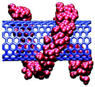 Fig. 2—Amylose chain coiled around a single-wall carbon nanotube. From Dagani (2002).