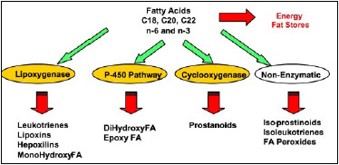 Fig. 2—Fatty acid oxidation in vivo.