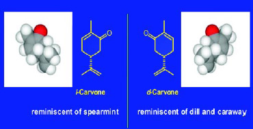 Fig. 7—Chirality of carvone. The two enantiomers have identical physical properties (boiling point, vapor pressure, etc.) but different olfactive qualities.