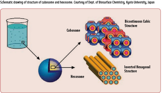 Figure 2 Schematic drawing of structure of cubosome and hexosome. Courtesy of Dept. of Biosurface Chemistry, Kyoto University, Japan