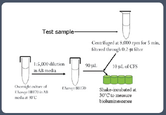 Figure 4 Schematic representation of the AI-2 activity bioassay (note that negative controls must be included as needed)