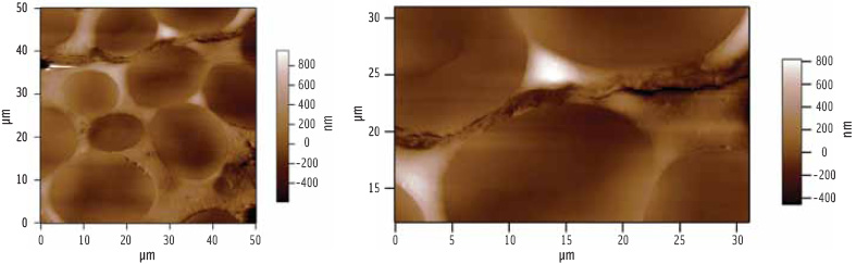 Figure 2. AFM images of the cut surface of dry seeds reveal gross features such as starch granules and cell walls (right).
