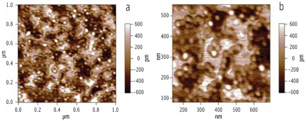 Figure 6. (a) AFM topography image of lipase-colipase penetration into a mixed phospholipid-bile salt film. (b) Electronic zoom of the lower left region showing the clustering of the enzymes at domain boundaries.