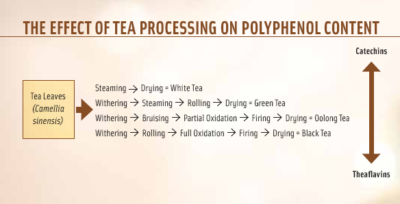 During the oxidation process that turns green tea into black tea, catechins are converted to theaflavins; both are polyphenolic antioxidants.