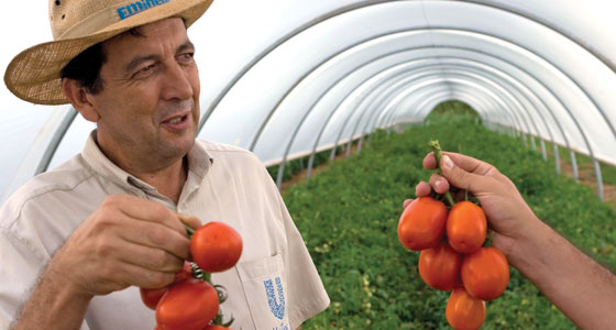 Unilever encourages its tomato growers to adopt sustainable practices like drip irrigation.