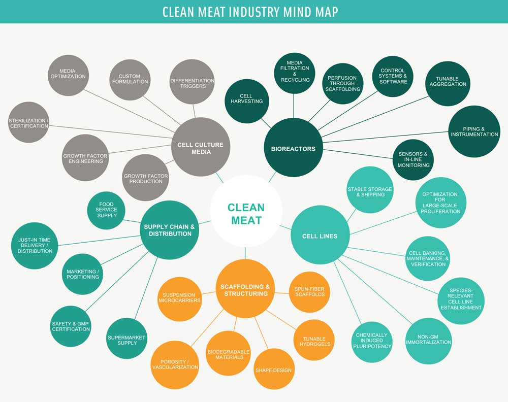 Figure 1. This conceptual mind map illustrates the primary elements for development and production of clean meat at large scale. Illustration courtesy of The Good Food Institute