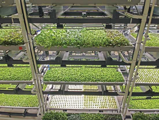 Bowery indoor vertical farming operation