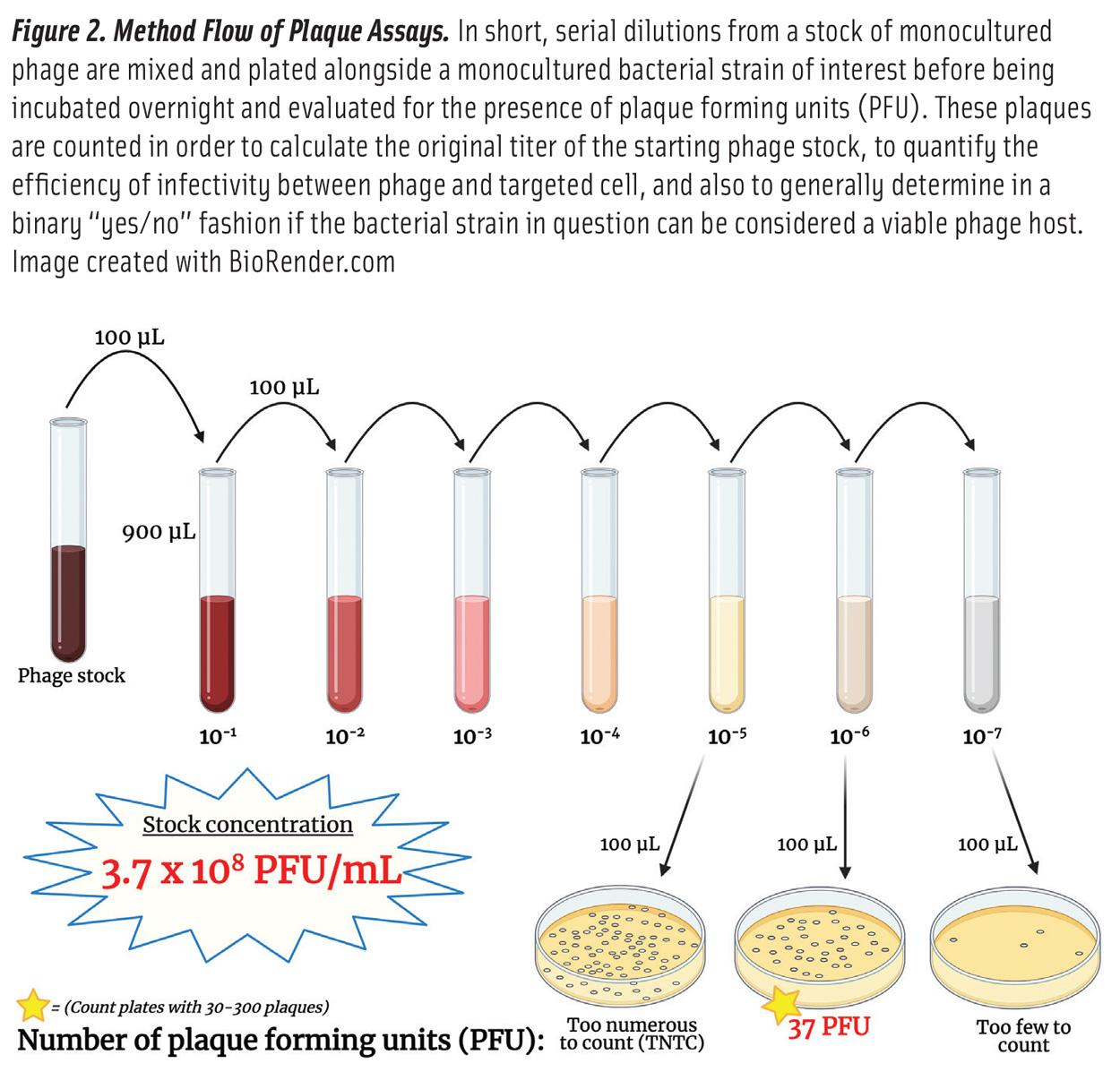 Bacteriophagesn Fig2