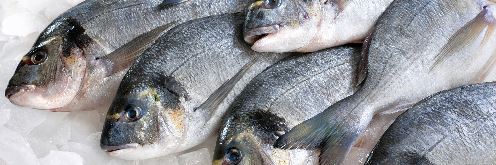 GFTC Continues Working Toward Seafood Traceability
