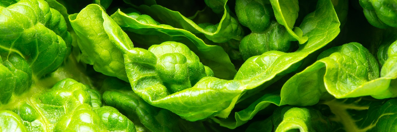 Leafy Greens Traceability Pilot