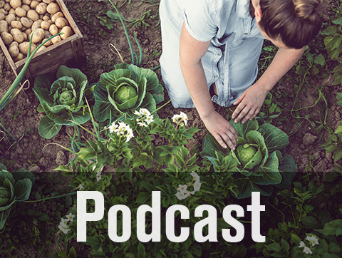Food Foundations Part 3 October podcast