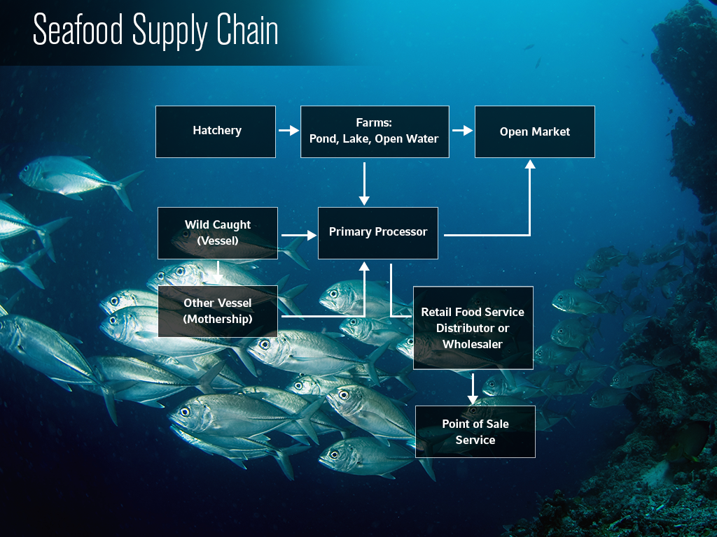 Seafood Supply Chain