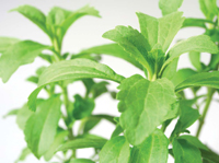 The safety of sweeteners derived from the stevia plant has been rigorously evaluated.