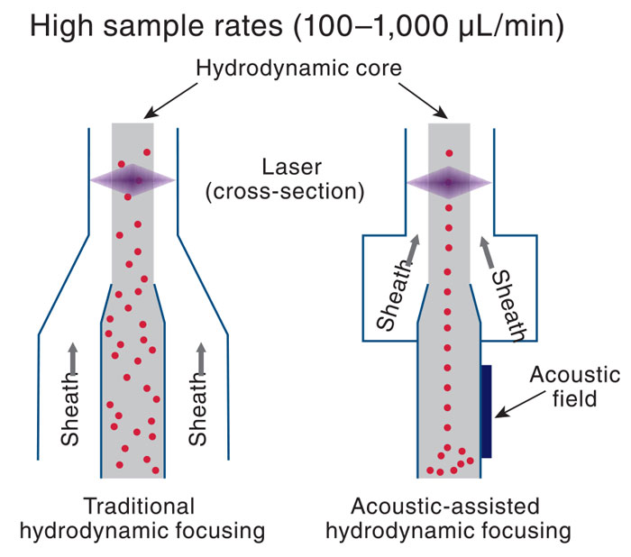 Applying Flow Cytometry to Food and Dietary Supplements